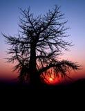 De boom van het spook Stock Afbeeldingen