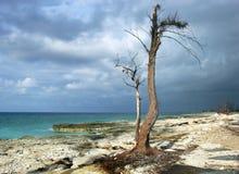 De boom van het Spook royalty-vrije stock foto's