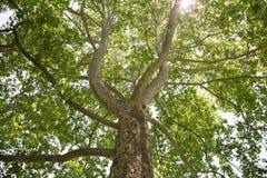De boom van het Vliegtuig van Londen Stock Foto's