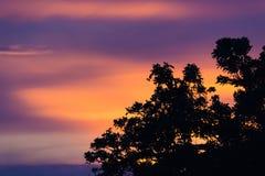 De Boom van het zonsondergangsilhouet Royalty-vrije Stock Fotografie