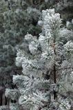 De boom van Kerstmis Stock Afbeeldingen