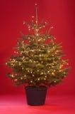 De boom van Kerstmis met lightchain stock afbeeldingen