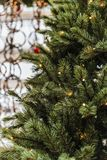 De boom van de Kerstmispijnboom met lichten stock foto's