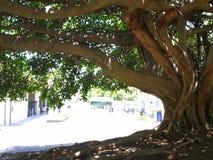 De boom van Nice Royalty-vrije Stock Afbeeldingen