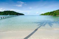 De boom van Oconut op het strand Stock Afbeeldingen