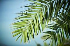 De boom van de palmtak onder blauwe hemel Uitstekende stijl Royalty-vrije Stock Foto's