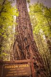 De boom van predikantjones royalty-vrije stock foto