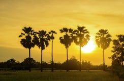 De boom van de silhouetsuiker plam stock afbeelding