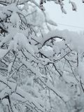 De boom van de sneeuw stock fotografie