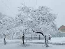 De boom van de sneeuw royalty-vrije stock foto's