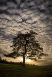 De boom van verleidingen stock afbeeldingen