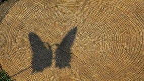 De boom van de vlinderschaduw rooit niemand hd lengte stock footage