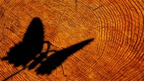 De boom van de vlinderschaduw rooit niemand hd lengte stock videobeelden