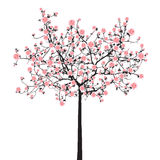 De boom van volledige bloeisakura Royalty-vrije Stock Foto's