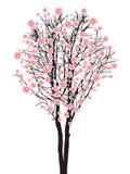 De boom van volledige bloeisakura Royalty-vrije Stock Fotografie