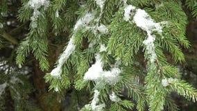 De boom van de winter die met sneeuw wordt behandeld stock videobeelden