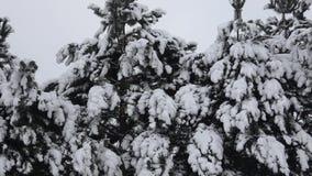 De boom van de winter die met sneeuw wordt behandeld Boomtak met sneeuw wordt behandeld die stock footage