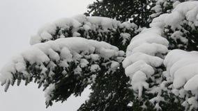 De boom van de winter die met sneeuw wordt behandeld Boomtak met sneeuw wordt behandeld die stock video