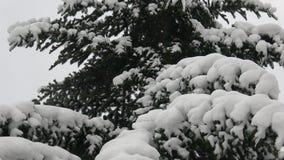 De boom van de winter die met sneeuw wordt behandeld Boomtak met sneeuw wordt behandeld die stock videobeelden
