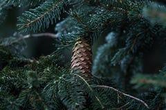 De boom van de de winterpijnboom in Boedapest Royalty-vrije Stock Fotografie