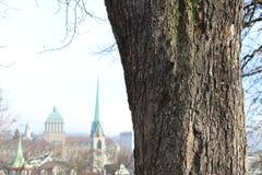 De boom van Zürich Stock Afbeeldingen