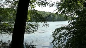 De boom van de de zomerbeuk forst bij Tornowsee-meer in Brandenburg Duitsland toeristische bestemming van Boltenmuehle Engeland B stock footage