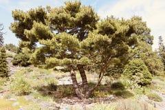 De boom van de de zomertijd royalty-vrije stock foto