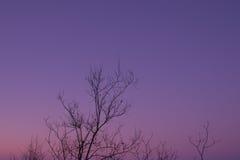 De boom vertakt zich achtergrond Stock Afbeeldingen