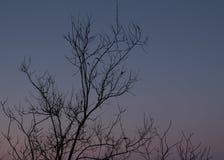 De boom vertakt zich achtergrond Royalty-vrije Stock Afbeelding