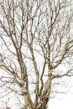 De boom vertakt zich droogte royalty-vrije stock afbeeldingen