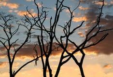 De boom vertakt zich silhouetten Royalty-vrije Stock Foto