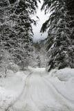 De boom voerde sneeuwweg Stock Afbeeldingen