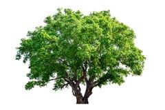 De boom is volledig gescheiden van het wit stock foto's