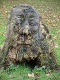 De boom waarvan de standbeelden van het hoofd van het park door een gebied van gevallen bladeren worden gemaakt stock afbeelding
