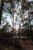 De boom was geboren op het bos stock foto