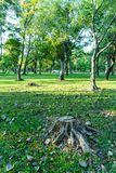 De boom werd gesneden in Tuin en vele boom heeft verlichting van zonsopgang i royalty-vrije stock fotografie