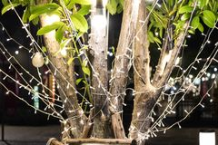 De boom werd verfraaid met Kerstmislichten Stock Foto