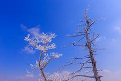 De Boom wordt behandeld door sneeuw Stock Afbeelding