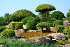 De boom wordt gesneden in paddestoelstruiken met stenen in de tuin Stock Afbeelding