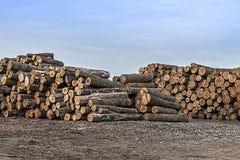 De boom zag logboeken stock foto's