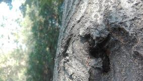 De boom in de zomer stock foto
