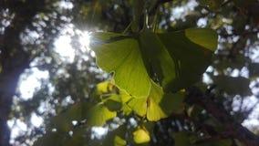De boom in de zomer stock afbeelding