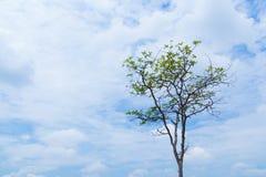 De boomachtergrond is hemel royalty-vrije stock afbeeldingen