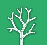 De boomachtergrond van de Ecotak Stock Fotografie