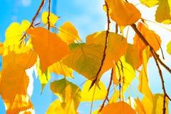 De boomachtergrond van de herfst EPS 8 inbegrepen dossier Royalty-vrije Stock Afbeeldingen