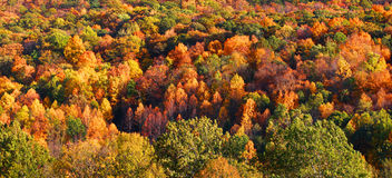 De boomachtergrond van de herfst EPS 8 inbegrepen dossier Stock Foto's