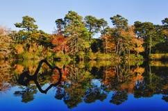 De boombezinningen van de herfst Royalty-vrije Stock Afbeeldingen