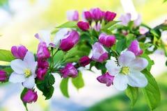 De boombloemen van de lente Stock Afbeelding