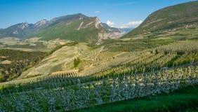 De boombloesem van de appel Apple-Boomgaarden in de lentetijd in het platteland van niet Vallei Val di Non, Trentino Alto Adige,  stock afbeelding
