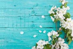 De boombloesem van de de lenteappel op turkooise rustieke houten achtergrond stock foto